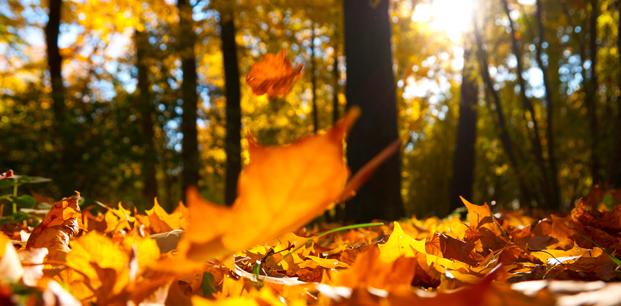 Sonbaharda Sağlığınıza Dikkat Ederek Hastalıklardan Korunma Rehberi?