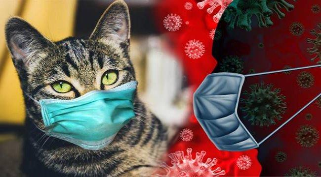 KKTC'de bir kediye koronavirüs bulaştı